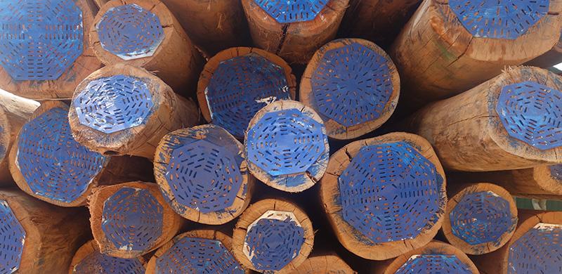 New Forests Company Rwanda